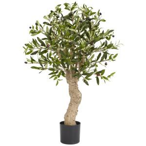 2.5' Olive Silk Tree
