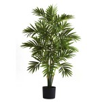 3' Areca Palm Tree