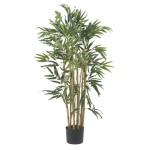3' Multi Bambusa Bamboo Silk Tree
