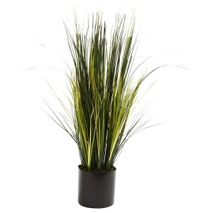 3' Onion Grass Plant