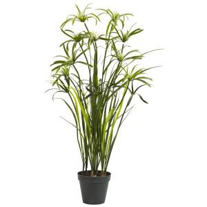 3' Papyrus Silk Plant