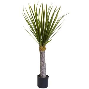 3' Yucca Tree