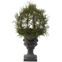 "30"" Pond Cypress Topiary w/Urn (Indoor/Outdoor)"
