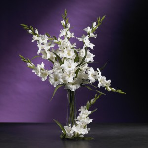 "36"" Gladiola Stem (Set of 12)"