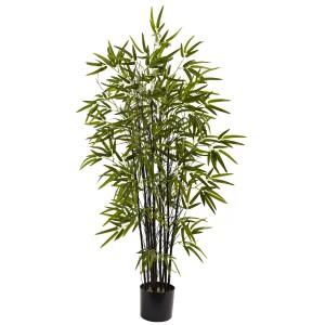 4' Black Bamboo Tree
