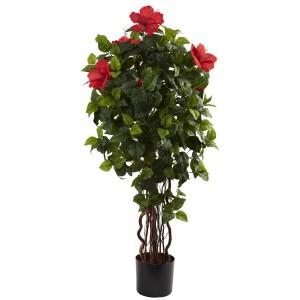 4' Hibiscus Tree