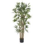 4' Multi Bambusa Bamboo Silk Tree