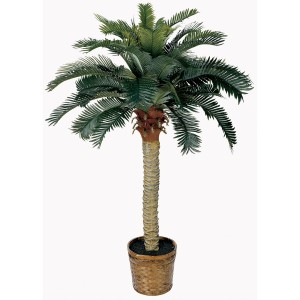 4 ft Sago Silk Palm Tree
