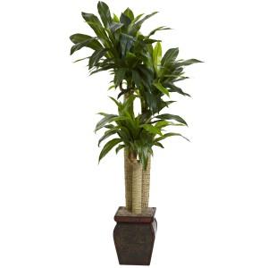 4.5' Cornstalk Draceana w/Vase (Real Touch)