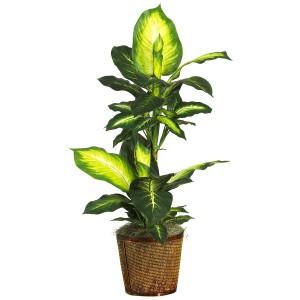 """42"""" Golden Dieffenbachia w/Basket Silk Plant"""