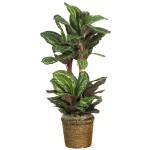 """45"""" Maranta w/Basket Silk Plant"""