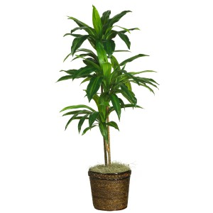 "48"" Dracaena w/Basket Silk Plant (Real Touch)"