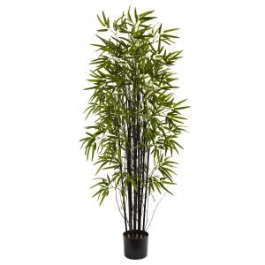 5' Black Bamboo Tree