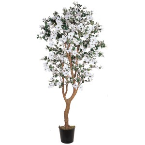 5' Dogwood Silk Tree