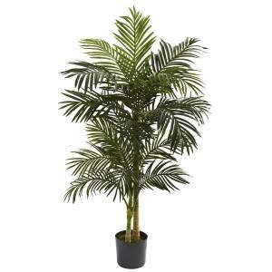 5' Golden Cane Palm Tree