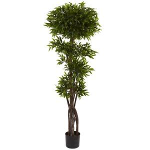 5' Ruscus Tree