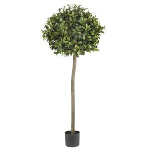5' Sweet Bay Ball Silk tree
