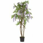 5' Wisteria Silk Tree