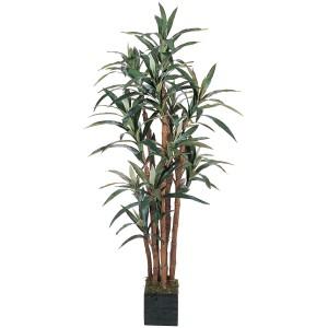 5' Yucca Silk Tree