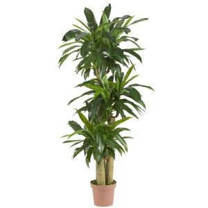 "57"" Corn Stalk Dracaena Silk Plant (Real Touch)"