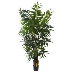 6' Bulb Areca Palm Tree