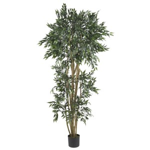 6' Green Ash Silk Tree