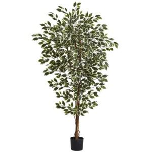 6' Hawaiian Ficus Tree