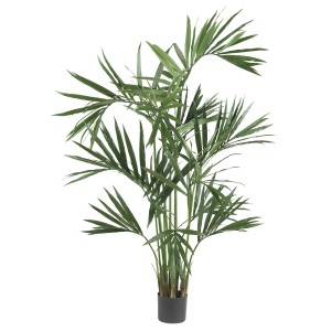6' Kentia Palm Silk Tree