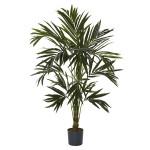 6' Kentia Silk Tree