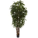 6' Raphis Palm Tree