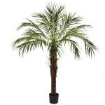 6' Robellini Palm Tree