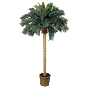 6' Sago Silk Palm Tree