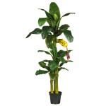 6' Triple Stalk Banana Silk Tree