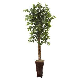 6.5' Ficus w/Decorative Planter