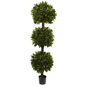 6.5' Sweet Bay Triple Ball Topiary