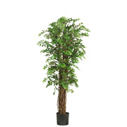 "68"" Mini Japanese Ficus Silk Tree"