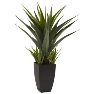 Agave w/Black Planter