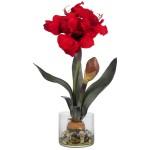 Amaryllis w/Round Vase