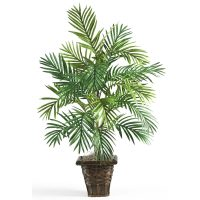 Areca Palm w/Wicker Basket