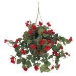 Begonia Hanging Basket Silk Plant