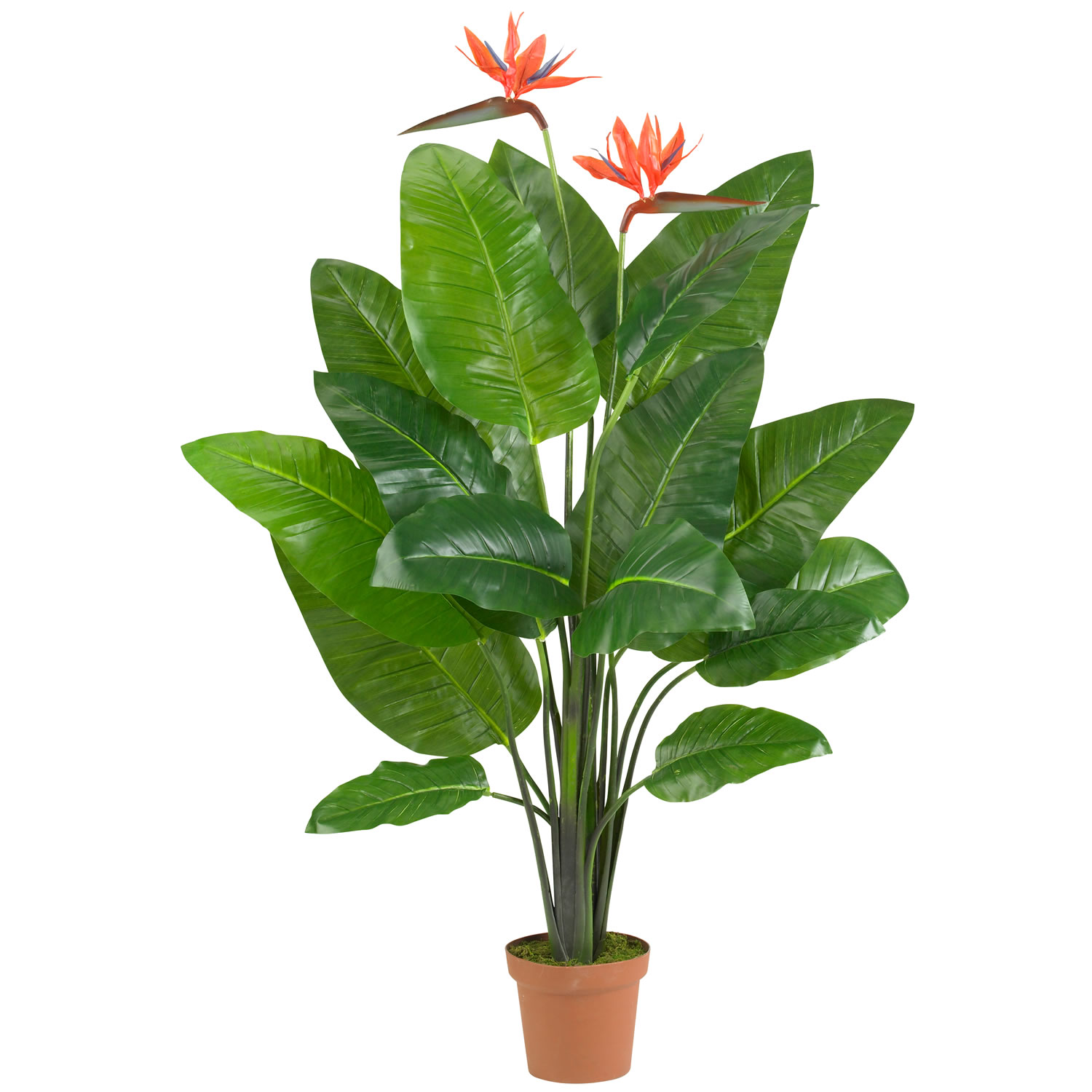 Bird Of Paradise Plant Real Touch Silk Specialties