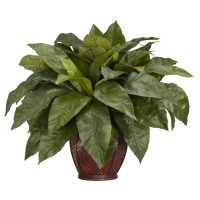 Birds Nest Fern w/Decorative vase