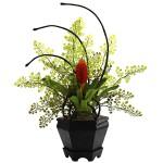 Bromeliad & Maidenhair Fern Arrangement