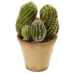 Cactus Garden w/Ceramic Planter