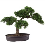 Cedar Bonsai Tree 16 in