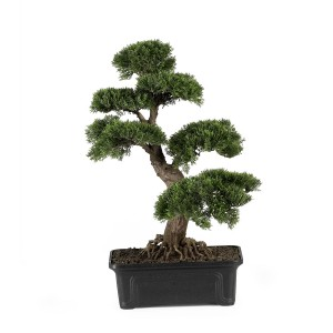 Cedar Bonsai Tree 24 in