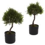 Cedar Bonsai w/Planter (Set of 2)
