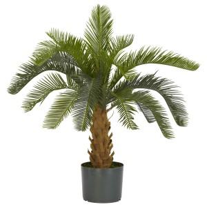 Cycas Silk Plant