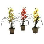 Cymbidium Orchid w/Vase (Set of 3)