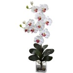 Double Giant Phalaenopsis w/Vase